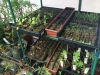 Greenhouse Seedlings 2013 - 2