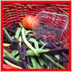 Tomatoes, raspberries and green beans in a red basket.