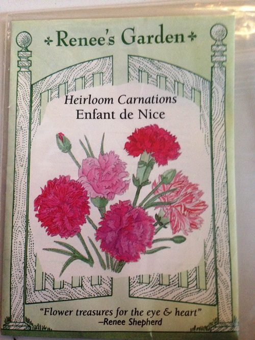 Growing Dianthus From Seed