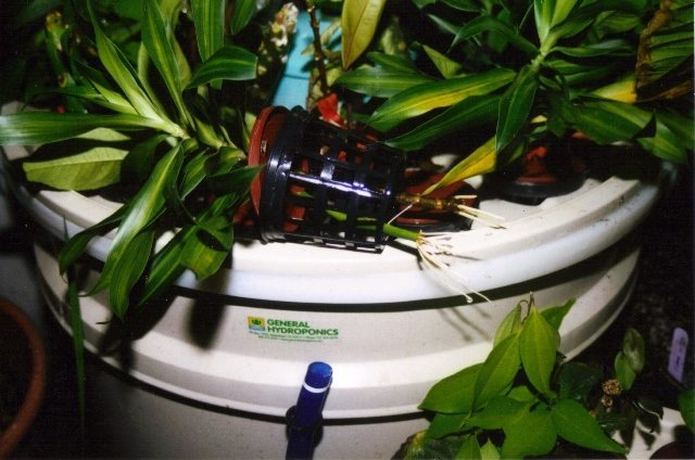 Rainforest Hydroponic System - Exotic Gardening