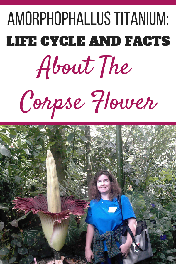 Sheri Ann Richerson standing beside the Amorphophallus titanium in bloom at Olbrich Botanical Gardens in Madison, Wisconsin.