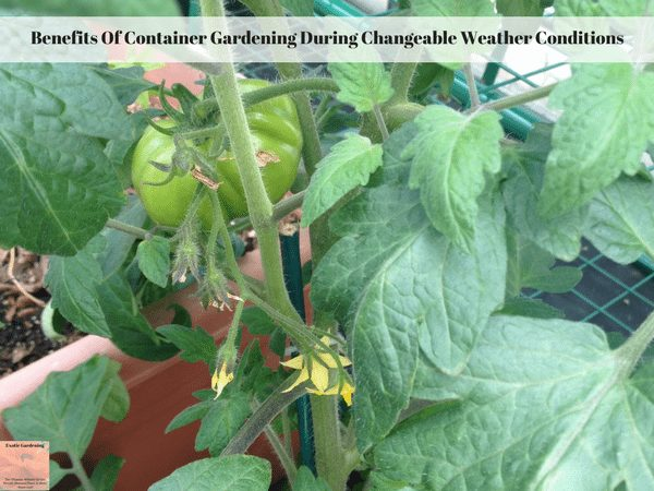 Benefits Of Container Gardening During Changeable Weather Conditions