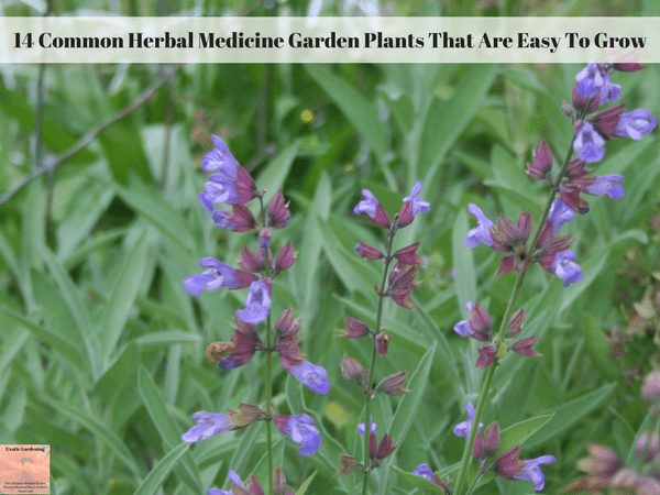 14 Common Herbal Medicine Garden Plants That Are Easy To Grow