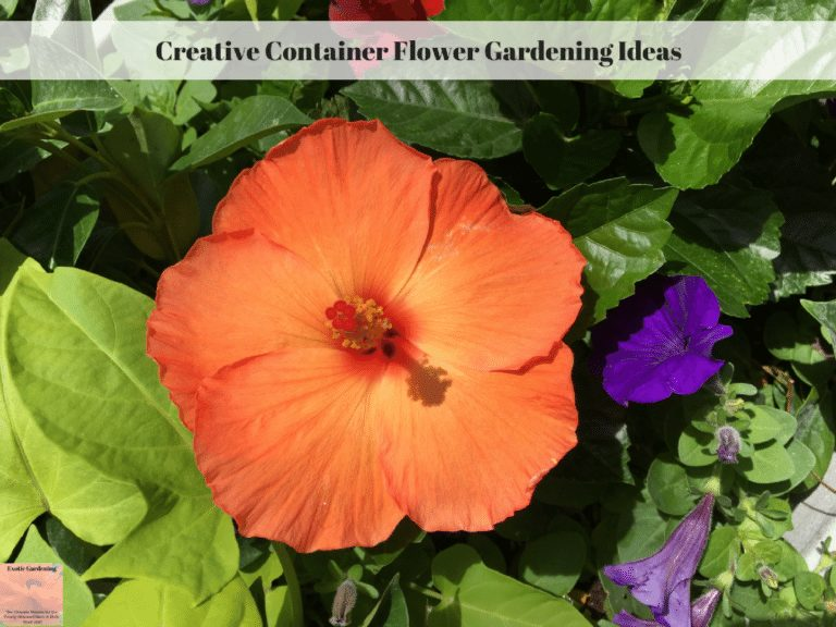 Creative Container Flower Gardening Ideas