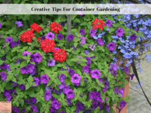 Creative Tips for Container Gardening