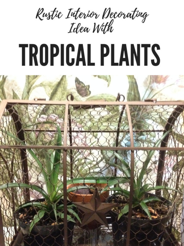 Rustic Interior Decorating Idea With Tropical Plants Story