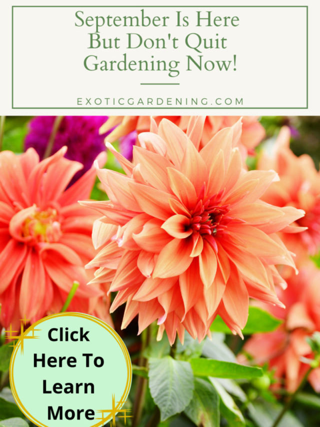 September Is Here But Don't Quit Gardening Now Story