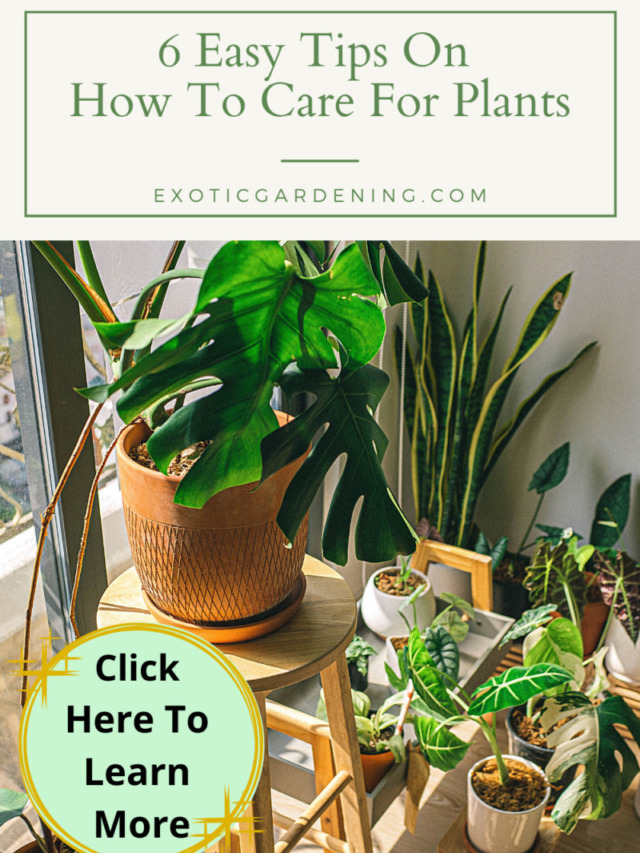6 Easy Tips On How To Care For Plants Story