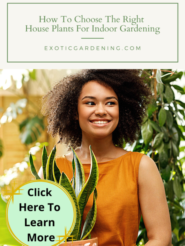 How To Choose The Right House Plants For Indoor Gardening Story