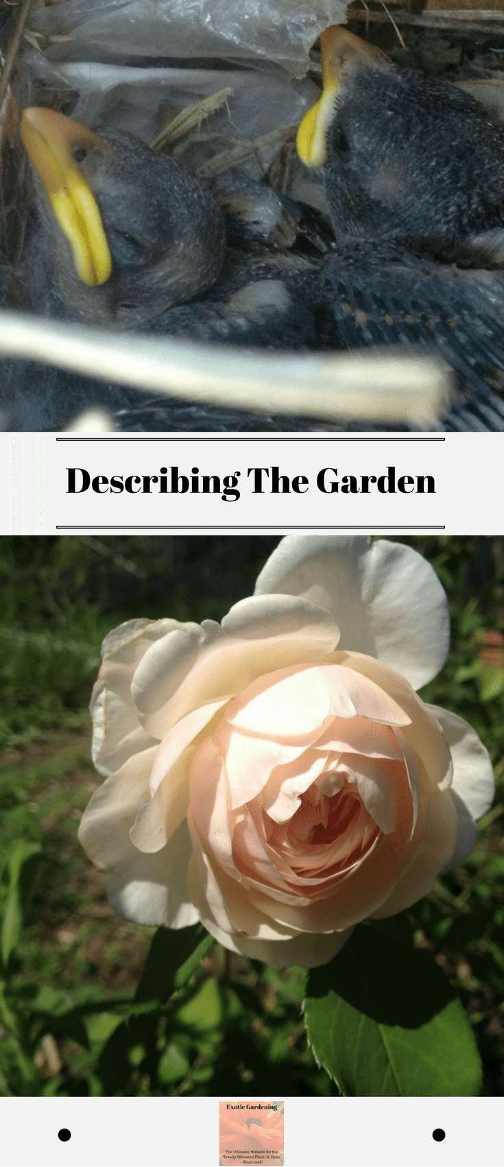 describing the garden exotic gardening use the buttons on the right hand side of the screen to share this article friends or family who might it useful pin the picture below to your