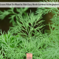 Learn What To Plant In This Easy Herb Garden For Beginners
