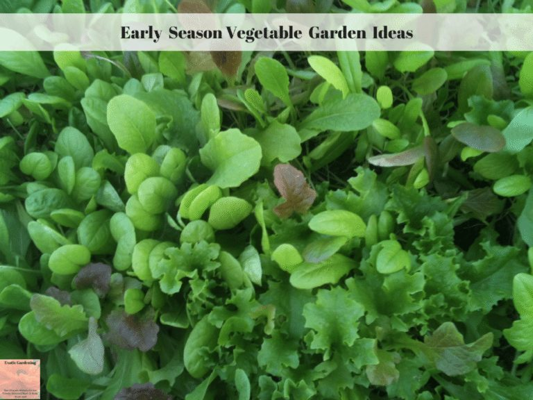 Early Season Vegetable Garden Ideas