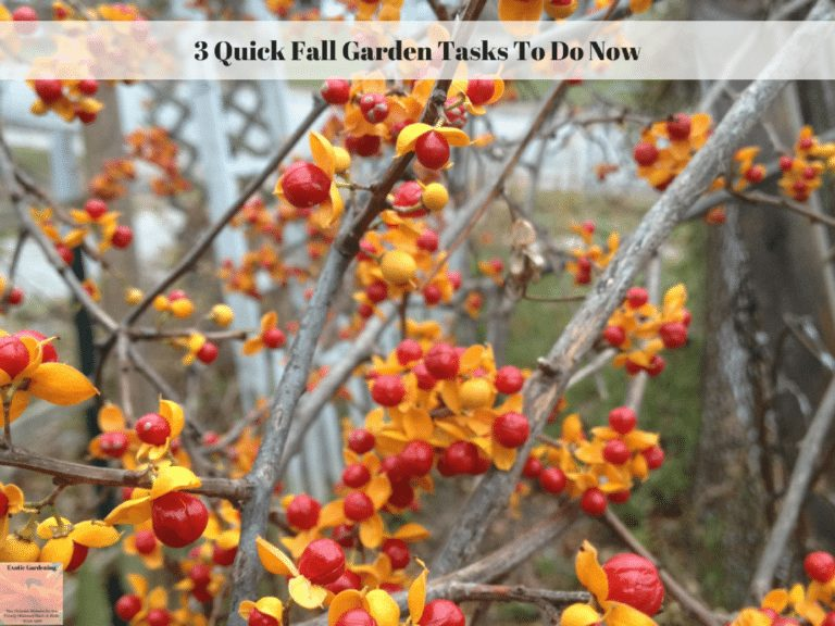 3 Quick Fall Garden Tasks To Do Now
