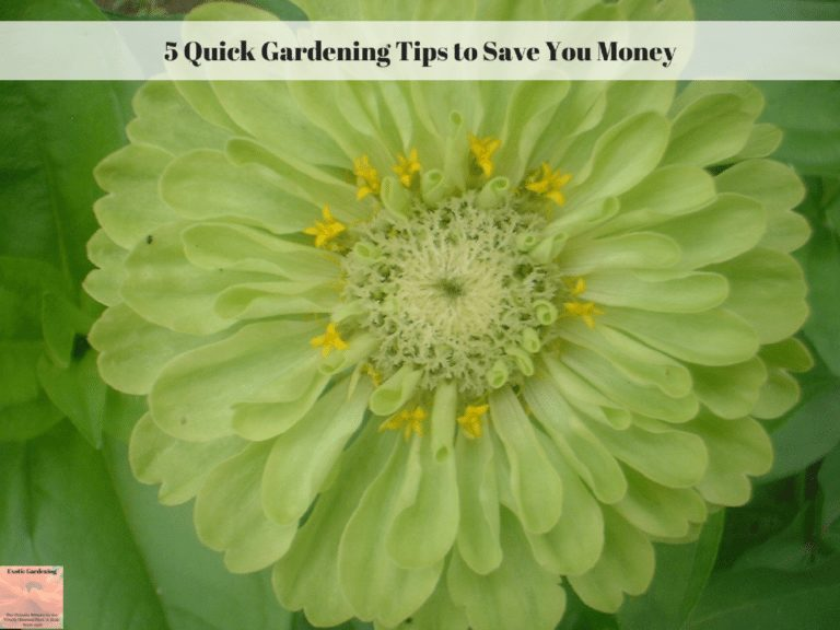 5 Quick Gardening Tips To Save You Money