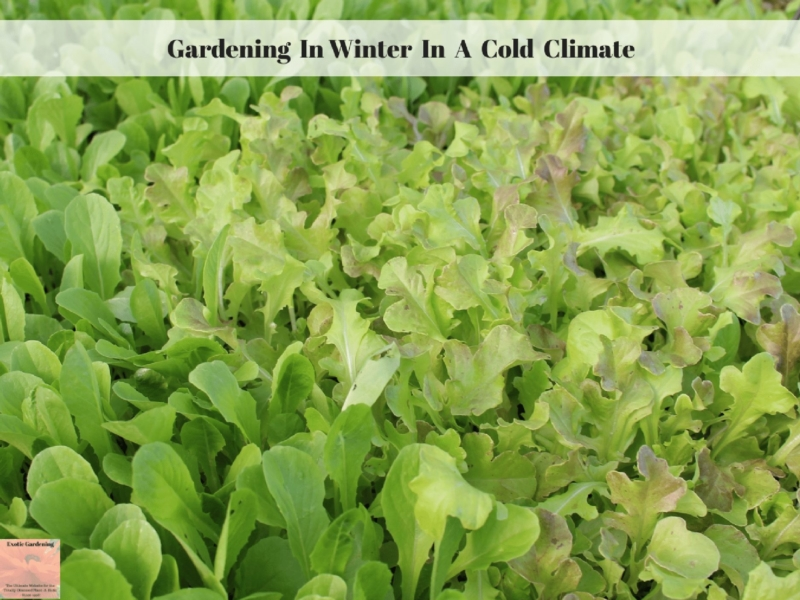 Gardening In Winter In A Cold Climate