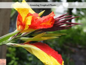 Growing Tropical Plants