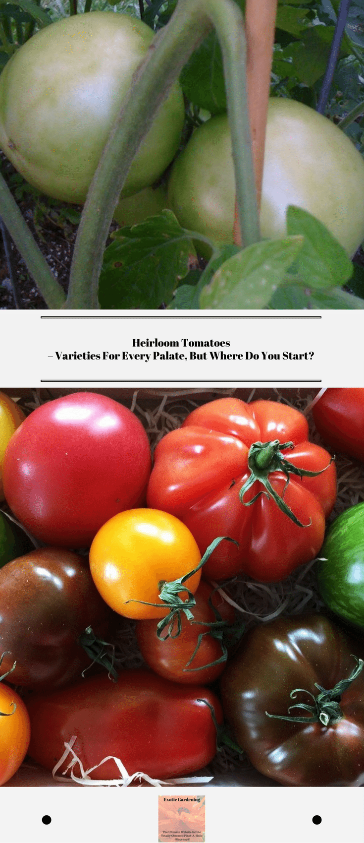 Heirloom Tomatoes – Varieties For Every Palate, But Where Do You Start?