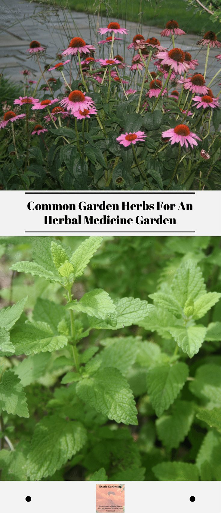 Common Garden Herbs For An Herbal Medicine Garden