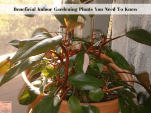 Beneficial Indoor Gardening Plants You Need To Know