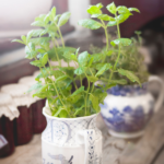 Potted herb plants growing in containers on a windowsill.