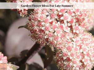 Garden Flower Ideas For Late Summer