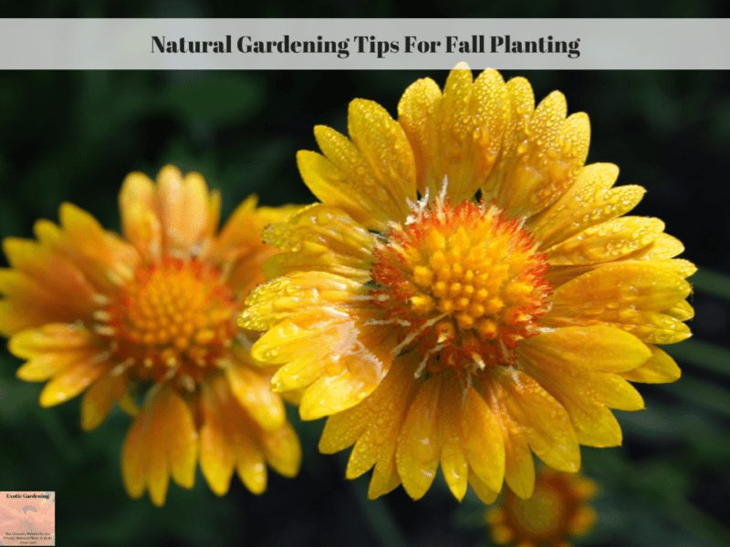 Natural Gardening Tips For Fall Planting