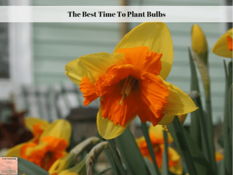 The Best Time To Plant Bulbs