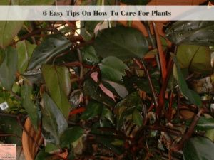 6 Easy Tips On How To Care For Plants