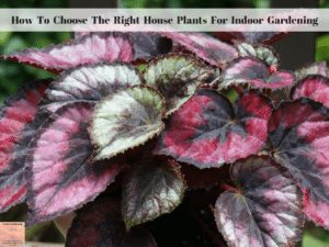 How To Choose The Right House Plants For Indoor Gardening