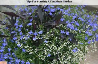 Tips For Starting A Container Garden
