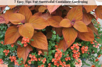 7 Easy Tips for Successful Container Gardening