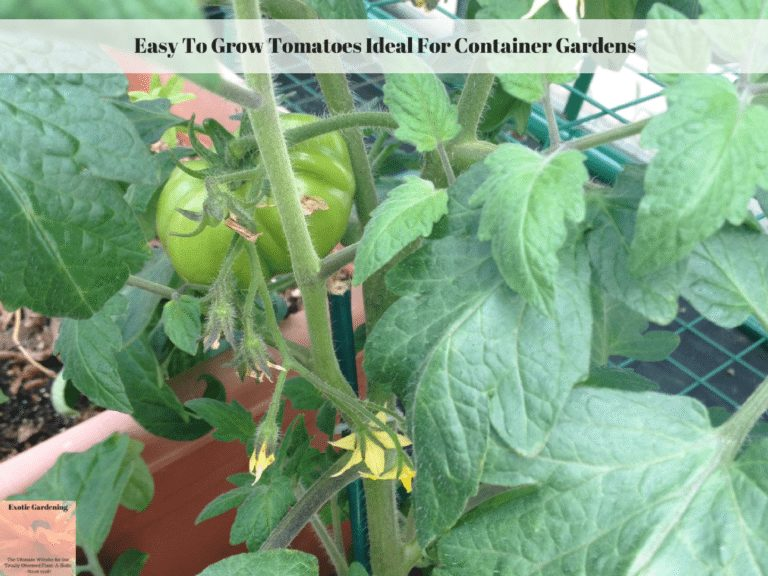 Easy To Grow Tomatoes Ideal For Container Gardens