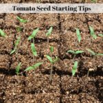 Tomato Seed Starting Tips