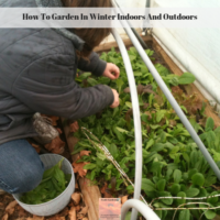 How To Garden In Winter Indoors And Outdoors